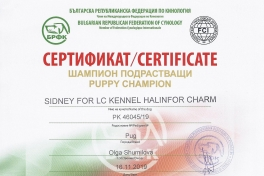 PUPPY-CH-SIDNEY-FOR-LC-KENNEL-HALINFOR-CHARM